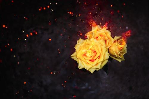 #flor #fogo#faãsca#amor #quente #brasa #dream </ 的 免费素材照片