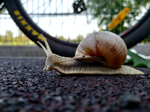 Free stock photo of garden snail, nature, shell