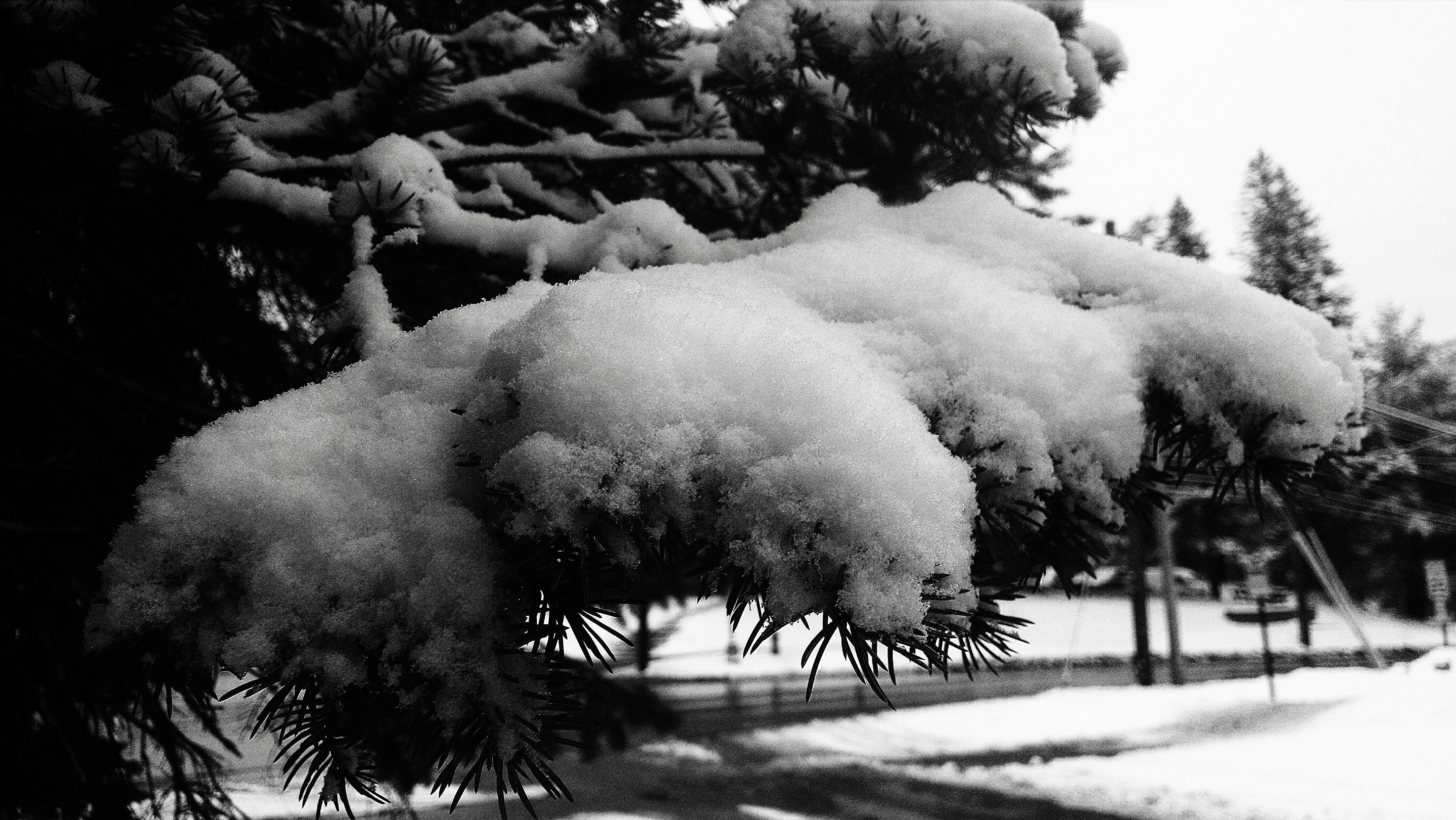 Free stock photo of snow, winter, spring, tree