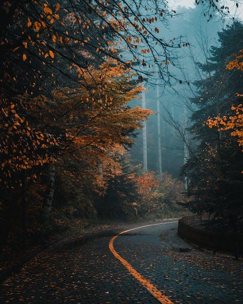 光, 光線, 冷 的 免費圖庫相片