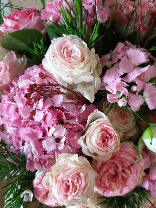 A Variety of Beautiful Pink Flowers