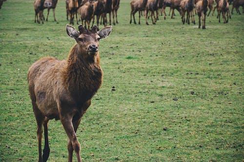 一群動物, 動物, 哺乳動物, 棕色 的 免費圖庫相片