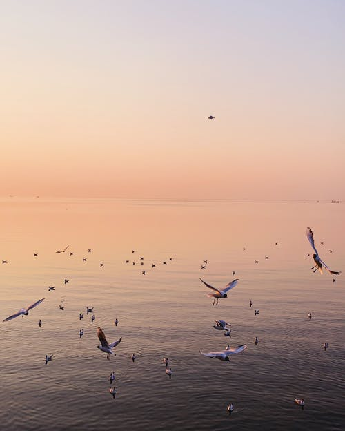 Flock of seagulls spreading wings soaring over rippling surface of sea under cloudless sundown sky