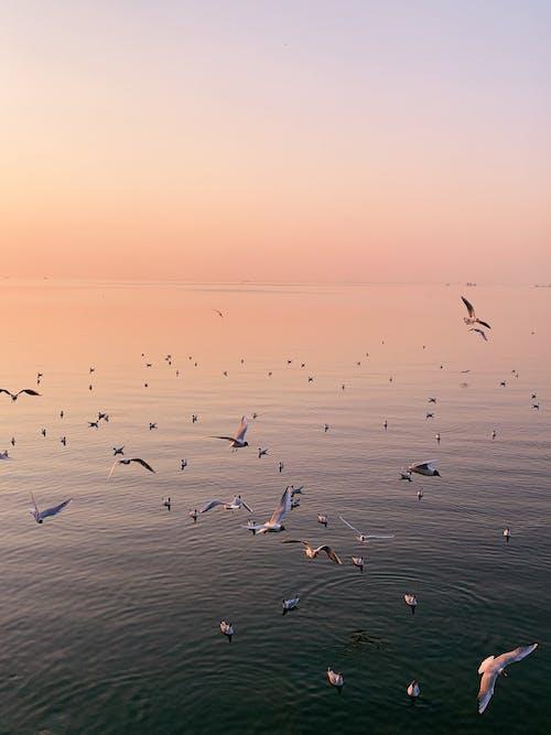 Flock of seabirds flying over rippling sea