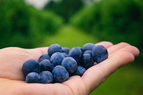 Close-Up Photo of a Person Holding Blueberries