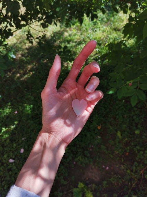 Kostnadsfri bild av fingrar, håller, hand