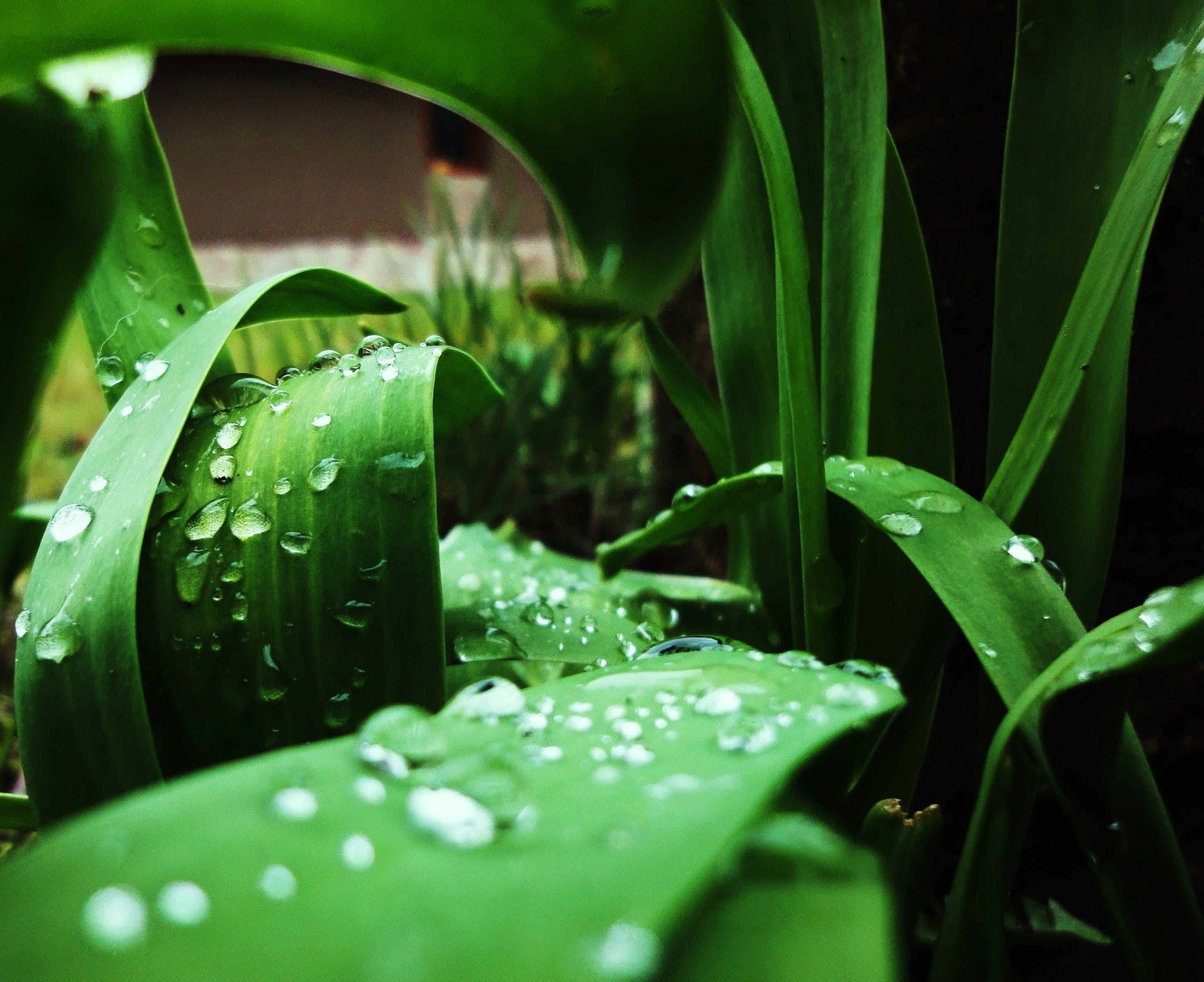 close-up, color, dew
