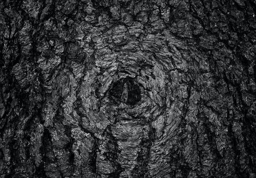Základová fotografie zdarma na téma kůže, pozadí, strom, tapety zdarma