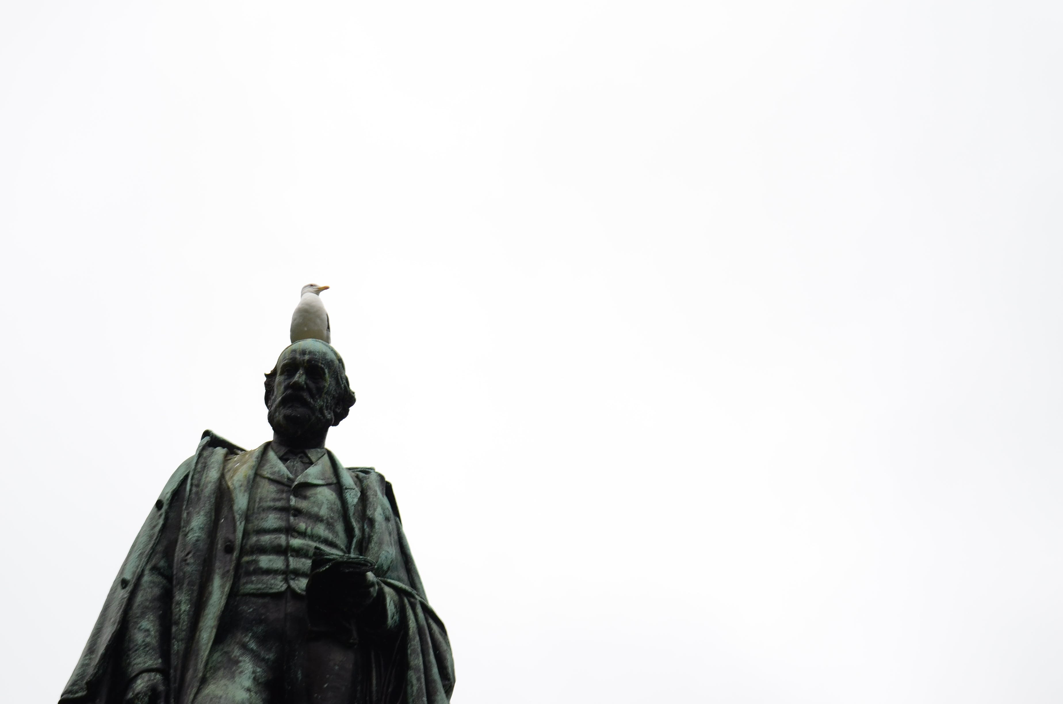 Free stock photo of bird, head, Liverpool, monument