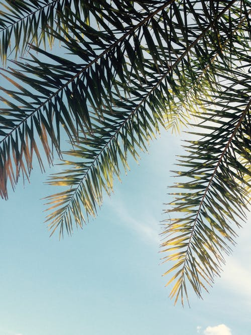 Foto d'estoc gratuïta de arbre, branca, color, foto amb angle baix