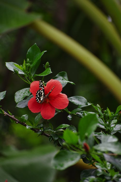 Red and Black Butterfly on Green Plant