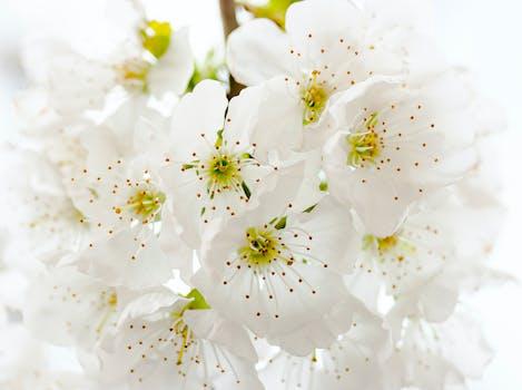 1000 beautiful white flowers photos pexels free stock photos closeup photography of white petaled flowers mightylinksfo