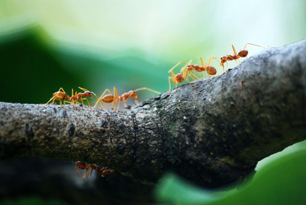 Repousse les insectes