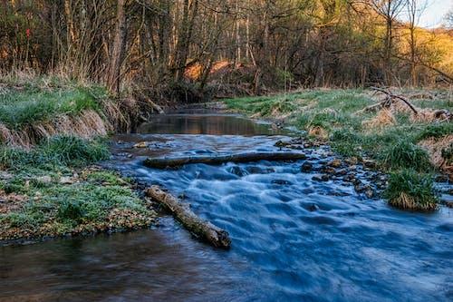 公園, 原本, 小河 的 免費圖庫相片