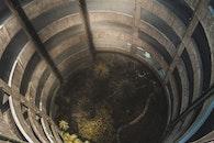 Green Leaves Plants Beside Brown Snake in Barrel