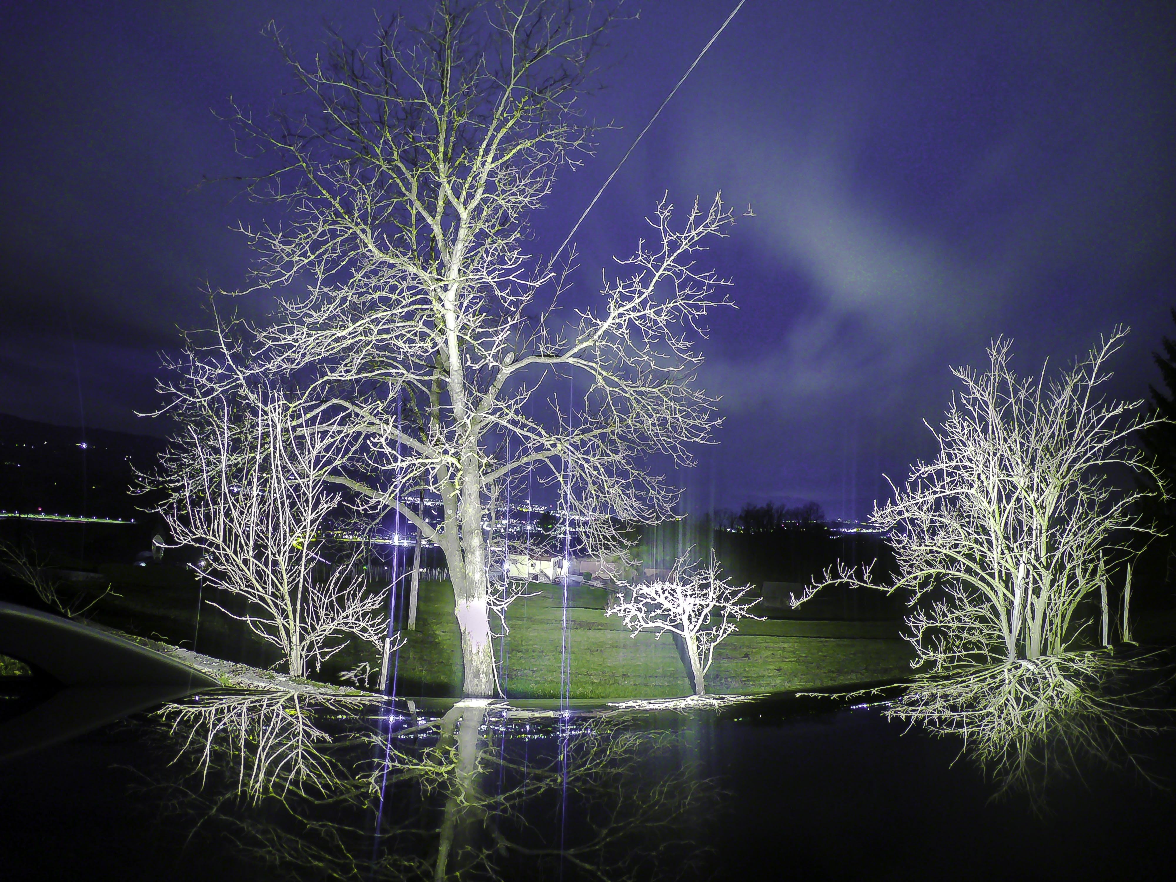 Free stock photo of night, sky, tree
