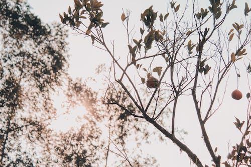 Бесплатное стоковое фото с ветвь, дерево, дикая природа