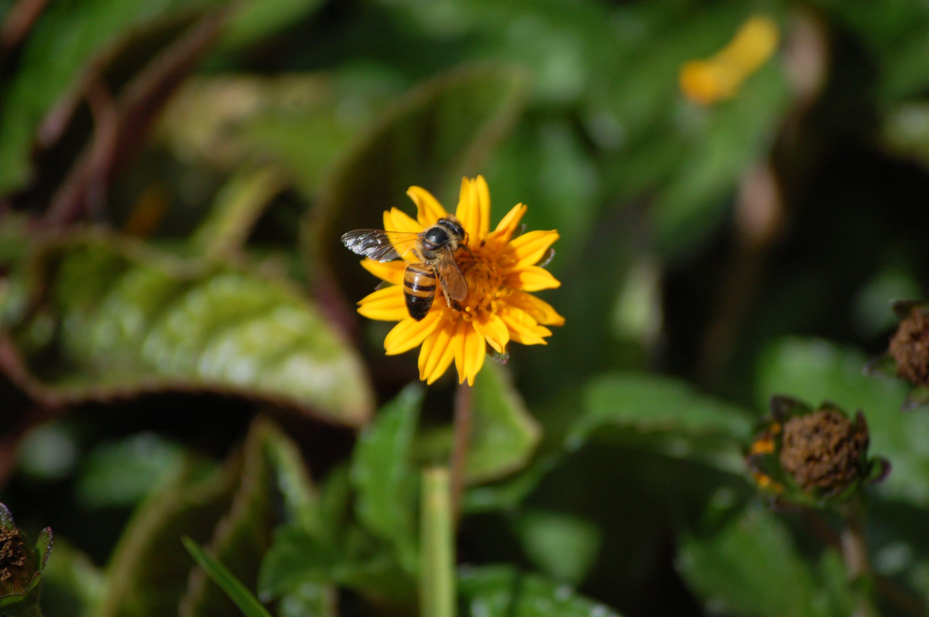 Free stock photo of bee, taking nectar