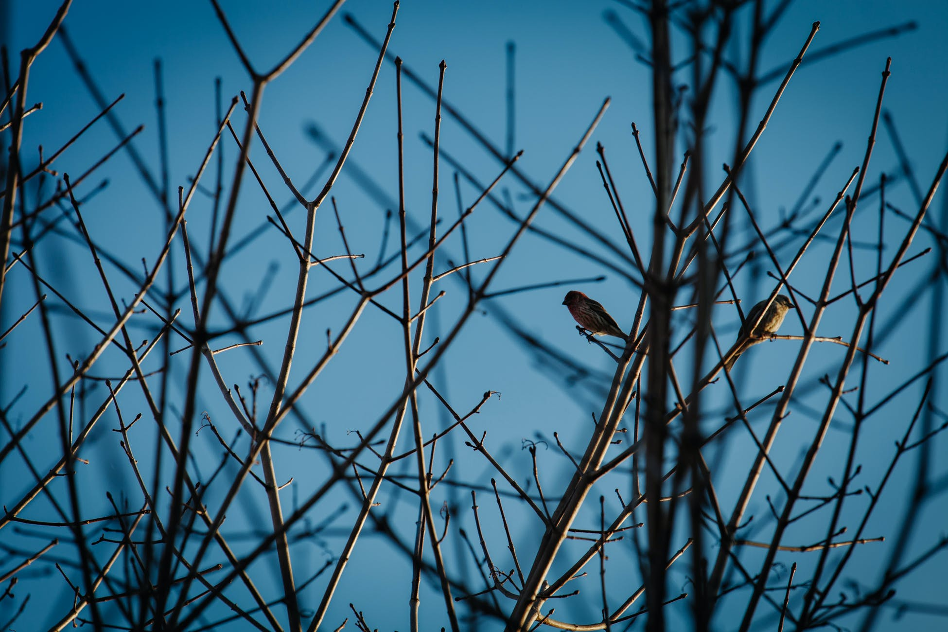 Free stock photo of bird, nature, outdoors, tree