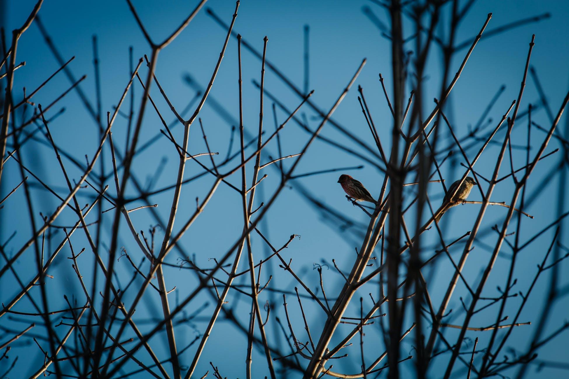 Free stock photo of nature, bird, tree, outdoors