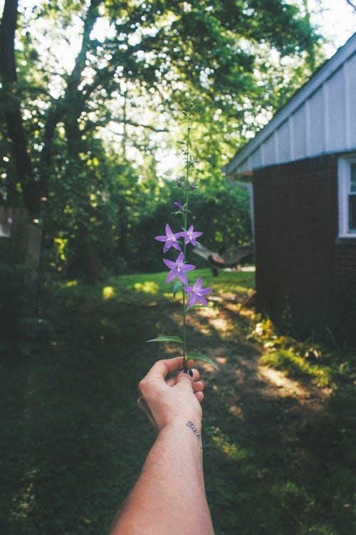 Gratis lagerfoto af barn, blad, blomst