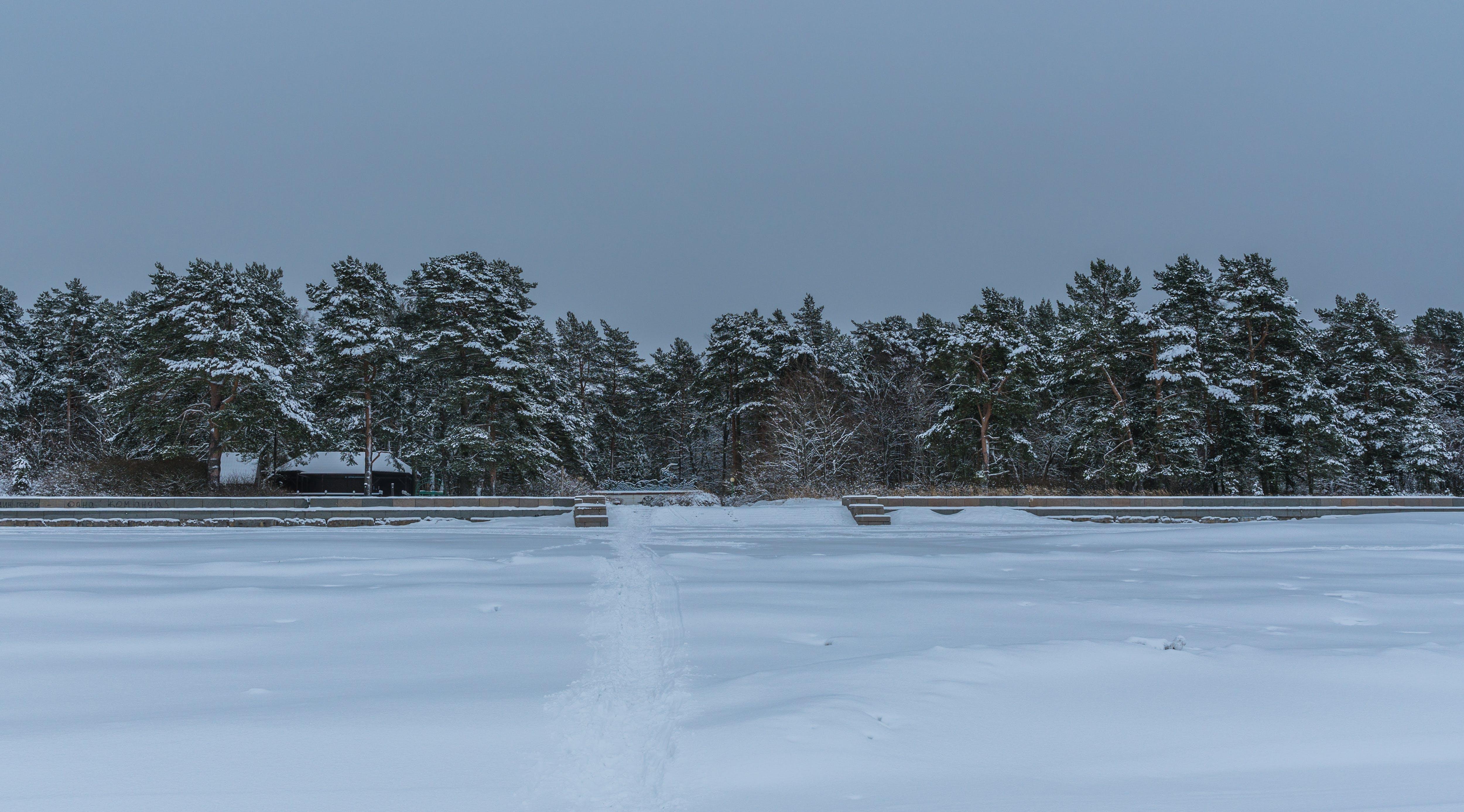 Free stock photo of snow, landscape, trees, winter