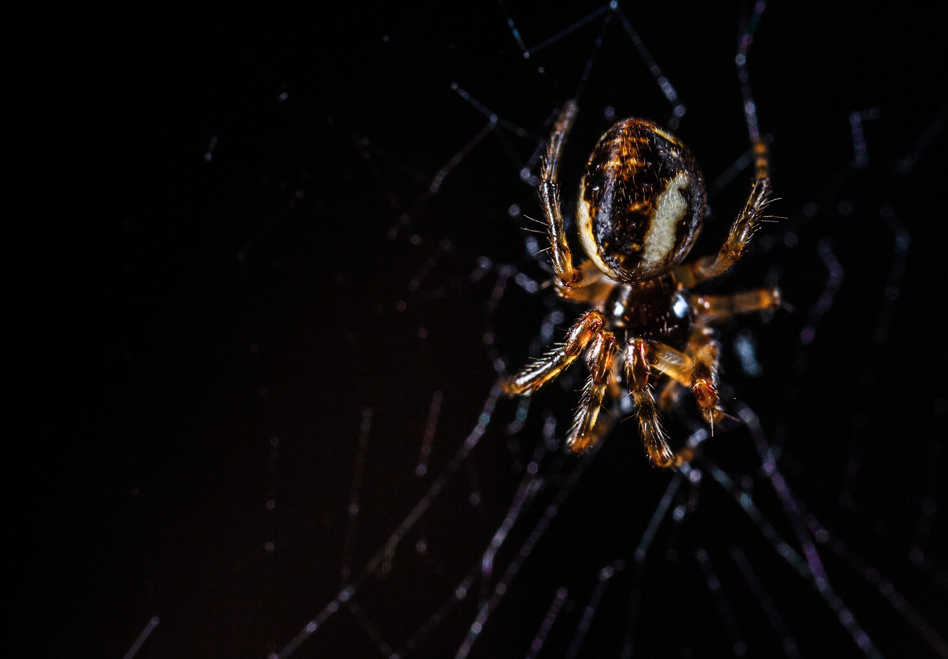 https://images.pexels.com/photos/843148/pexels-photo-843148.jpeg?cs=srgb&dl=animal-arachnid-black-background-843148.jpg&fm=jpg