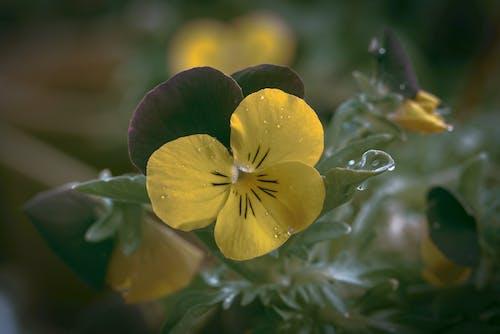 Yellow and Purple Flower in Tilt Shift Lens