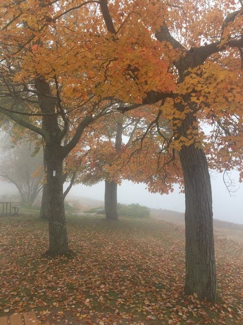 Free stock photo of fall leaves, fog