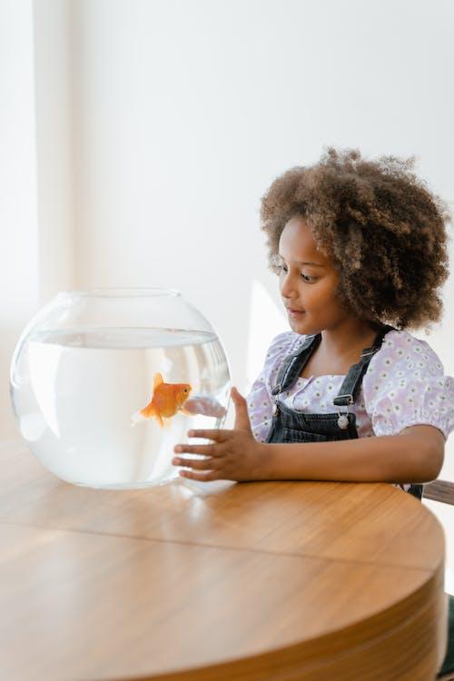 Gratis stockfoto met aan het kijken, afro haar, aquarium