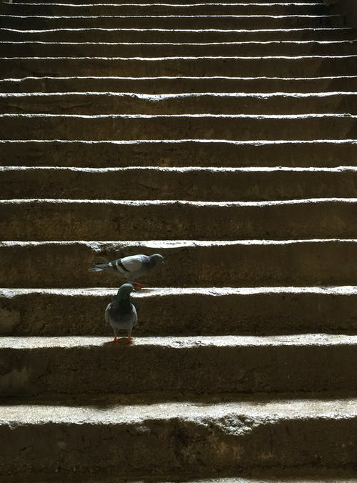 Free stock photo of dove, Malaysia, pigeon, staircase