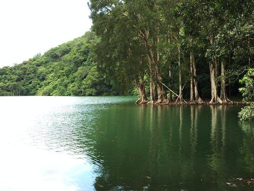 Free stock photo of Cajuput tree, hong kong, hongkong, kowloon