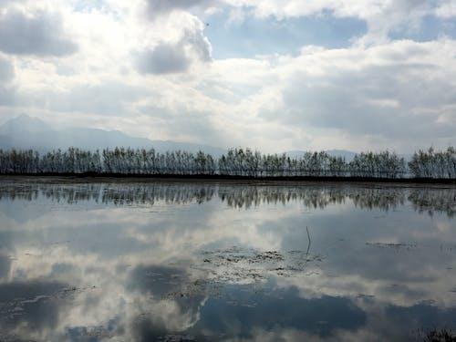 Free stock photo of china, dead tree, pond, tree