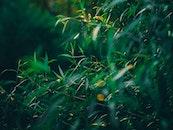 nature, leaves, tree