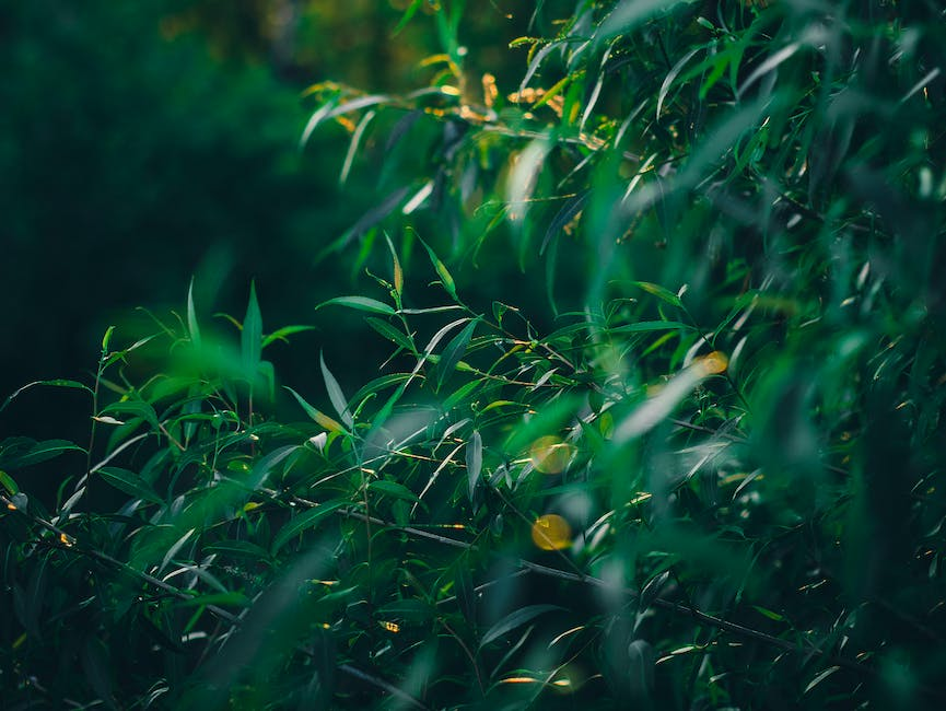 New free stock photo of nature, leaves, tree