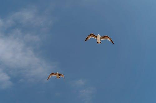 Birds Flying Under Blue Sky
