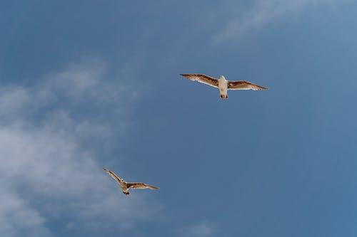 White Birds Flying Under Blue Sky