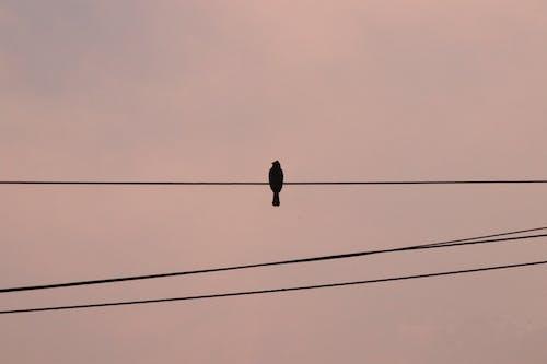 Free stock photo of bird, sepia, sepia tone