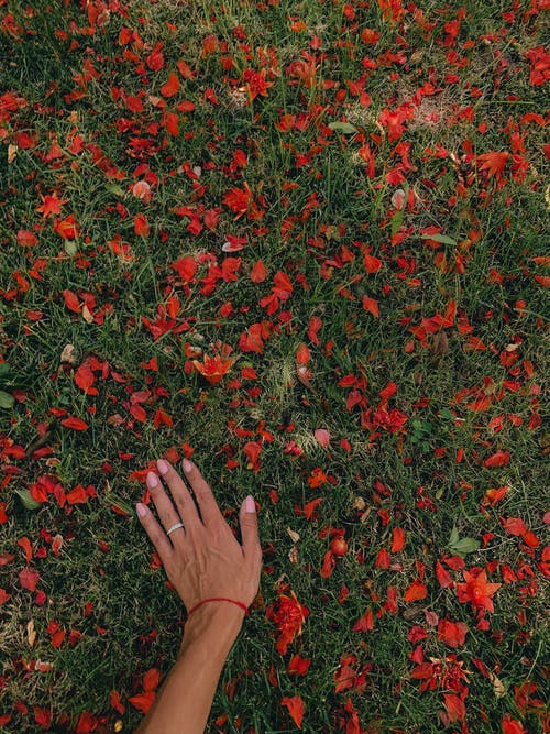 Persons Hand on Red Flowers