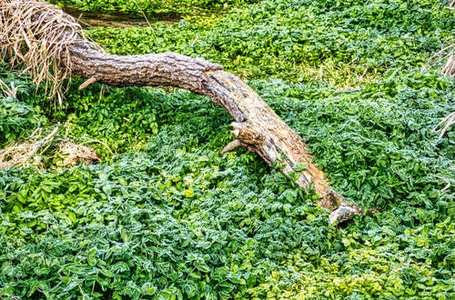Foto stok gratis agrikultura, daun, di luar