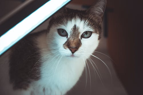 動物, 可愛, 寵物, 模糊 的 免費圖庫相片
