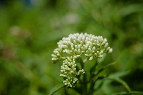 Gratis lagerfoto af blomsterknopper, blomstrende, farver, farverig