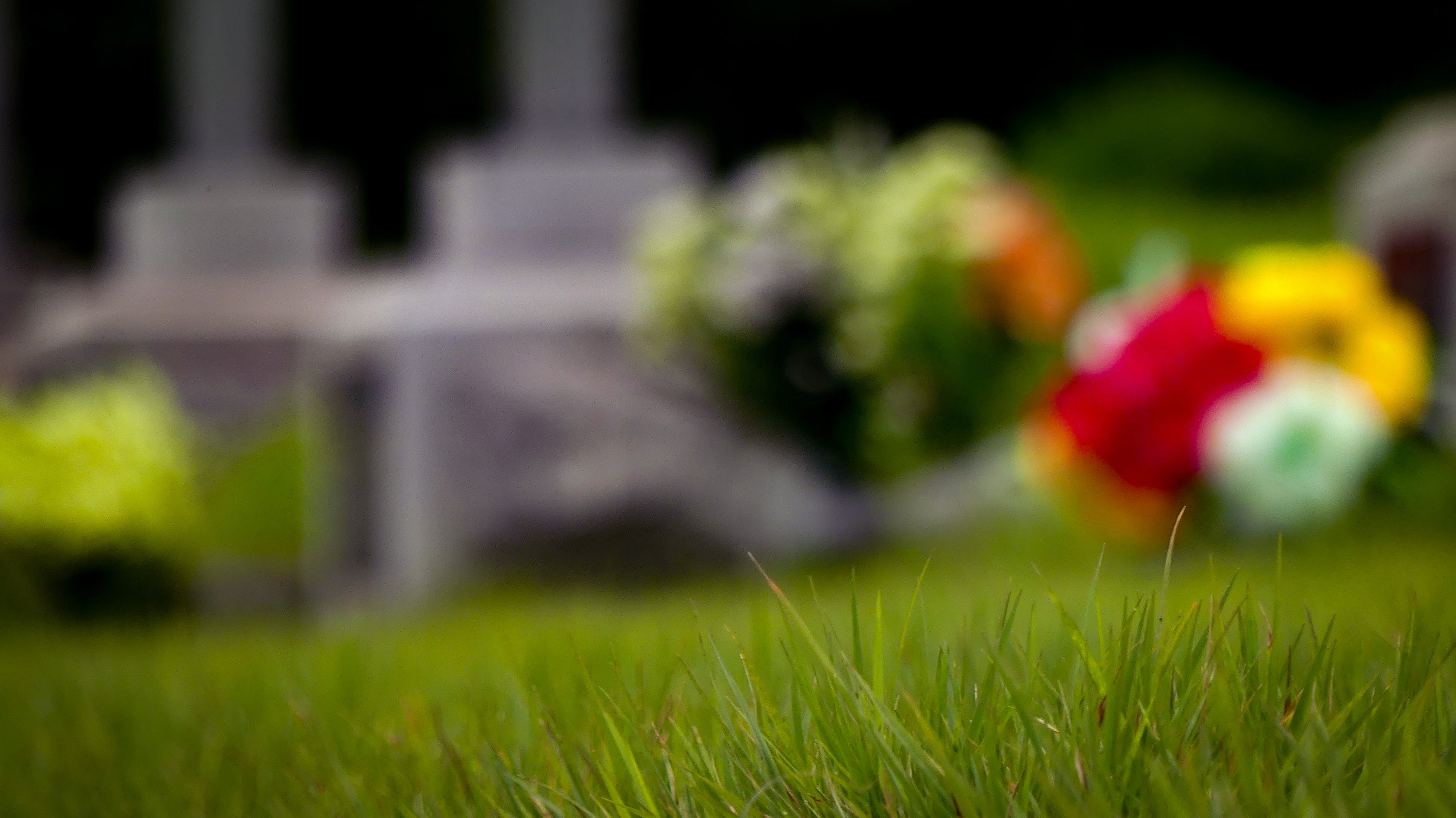 Free stock photo of 현충원, national cemetery