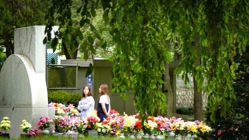 """Darmowe zdjęcie z galerii z cmentarz narodowy, í~ """"ì¶ © ì>"""