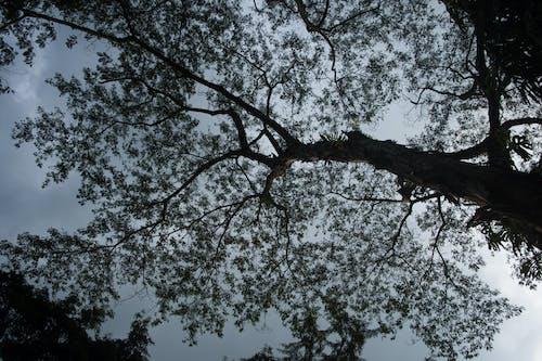 Ilmainen kuvapankkikuva tunnisteilla iltataivas, luonto, luontoäiti, Makuulla