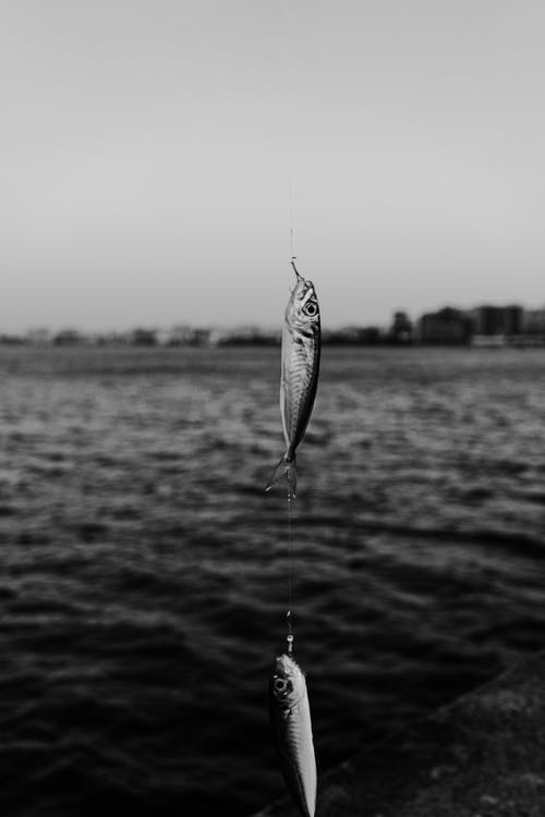 Grayscale Photo of Two Fish in a Fishing Line