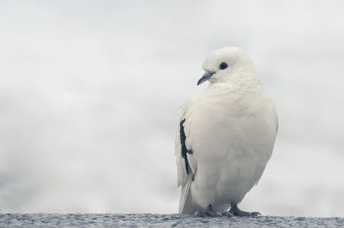 White and Black Bird on Trunk