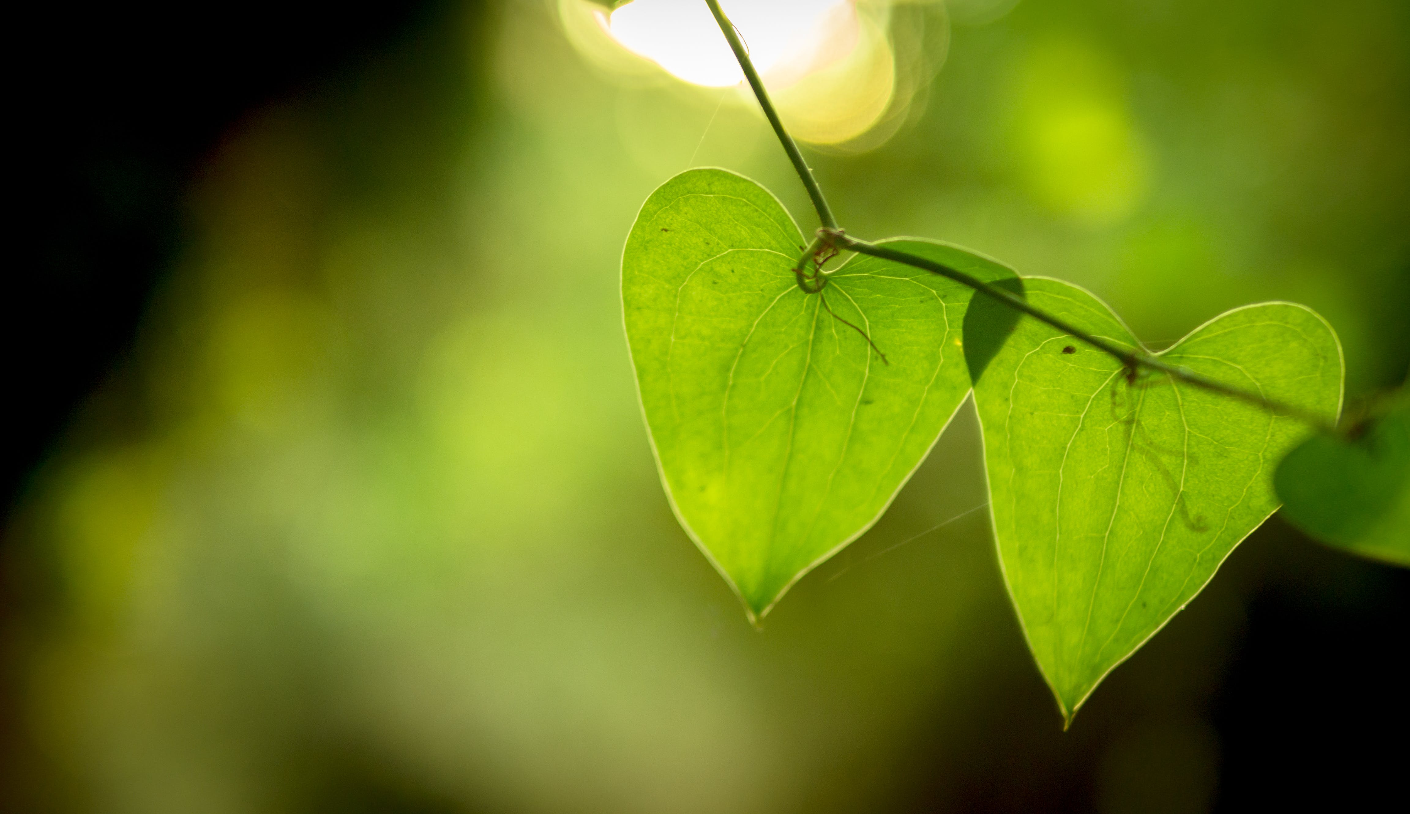 Free stock photo of nature, green, hearts, pair