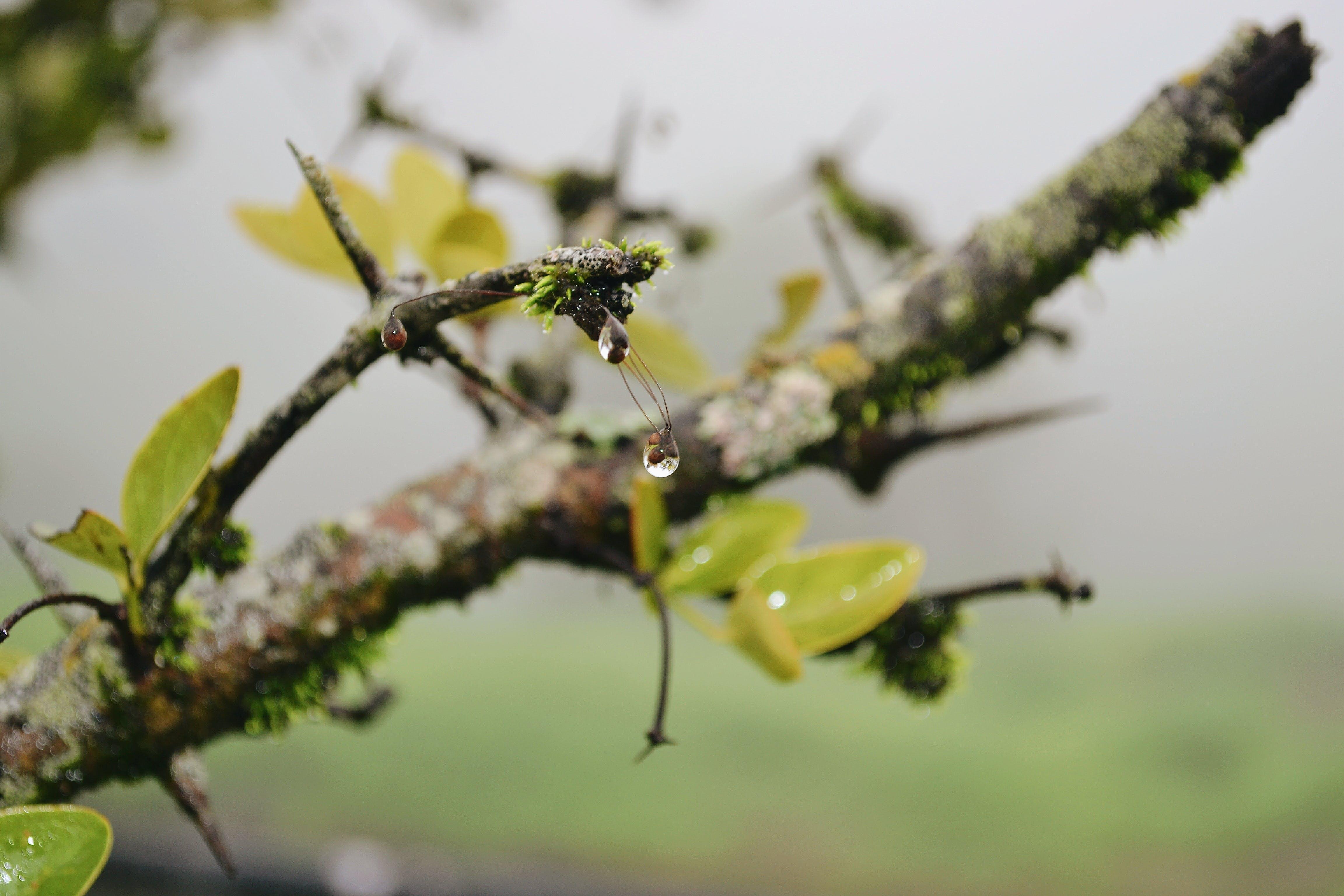 Free stock photo of dark green, dewdrops, droplet, drops