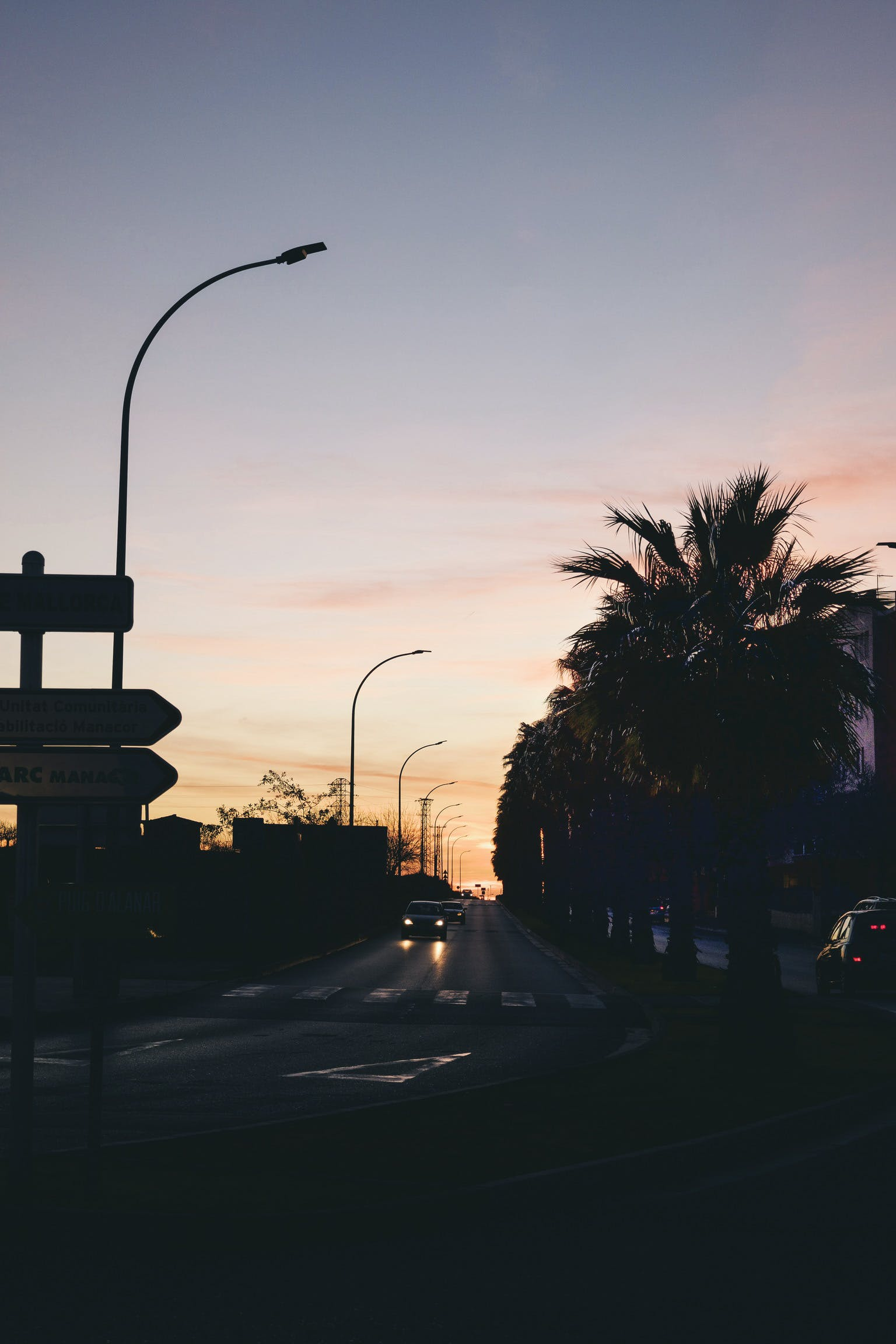 Silhouette Photo of Road Between Majesty Palm